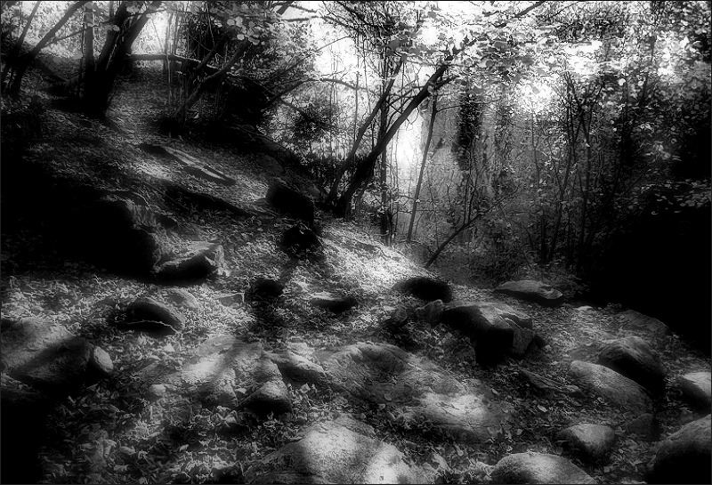 Shadows on the wood / Ombres al bosc