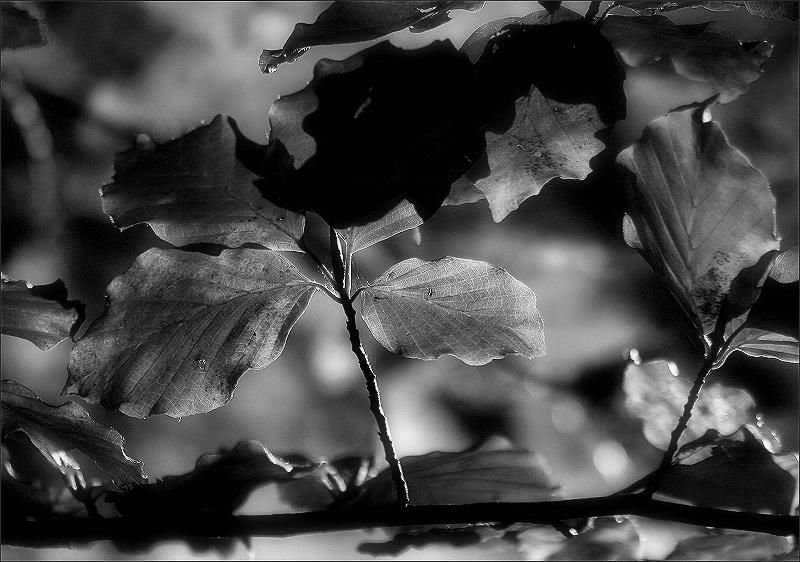 Autumn colors - autumn leaves / Colors de tardor - fulles de tardor