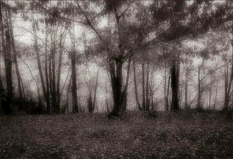 ombra de tardor / autumn's shadow