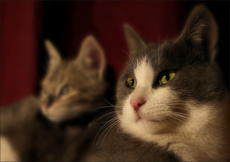 gat gran / big cat