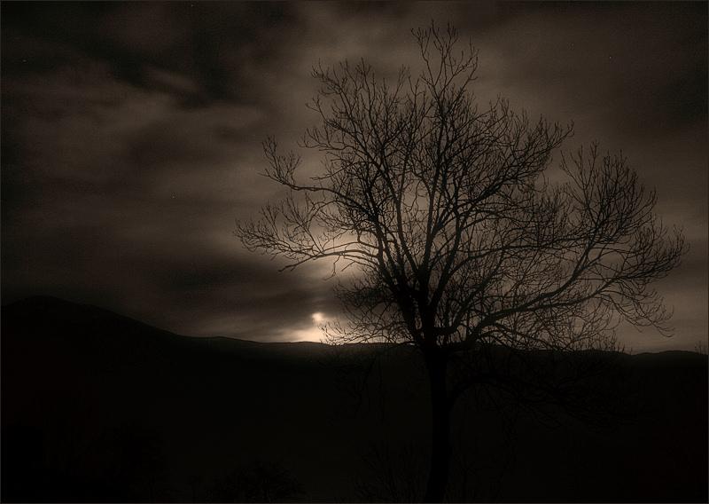 tree at moonlight / a la llum de la lluna