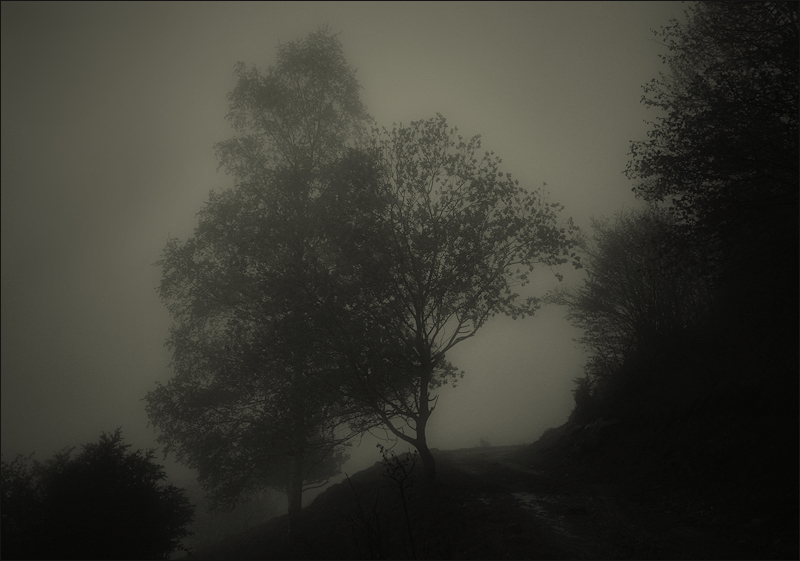 a way between fog and trees