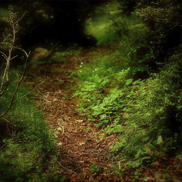 little ways / camins petits