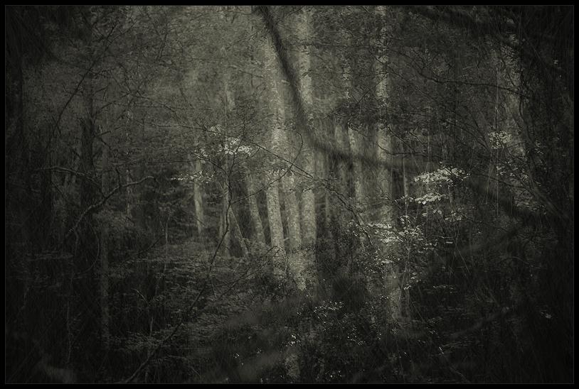 lost in a lost wood / perdut en un bosc perdut