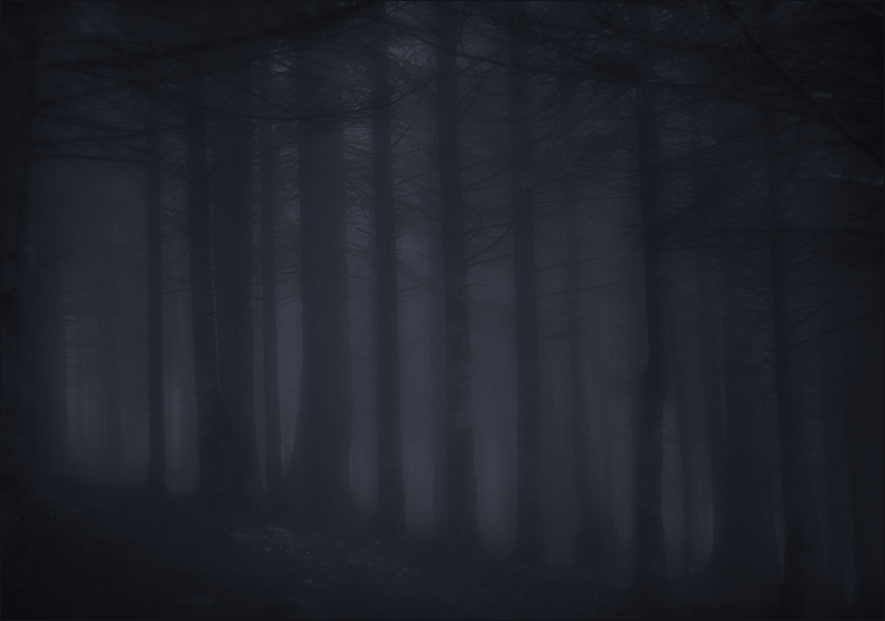 To see the wood, and can't see the trees for the fog