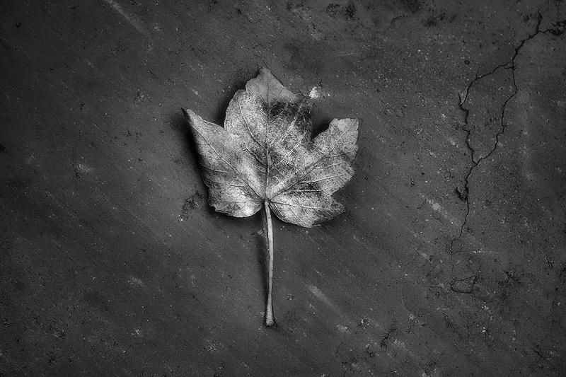 Fulla de tardor / hoja de otoño / autumn leaf