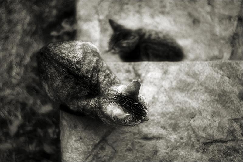 cats gats