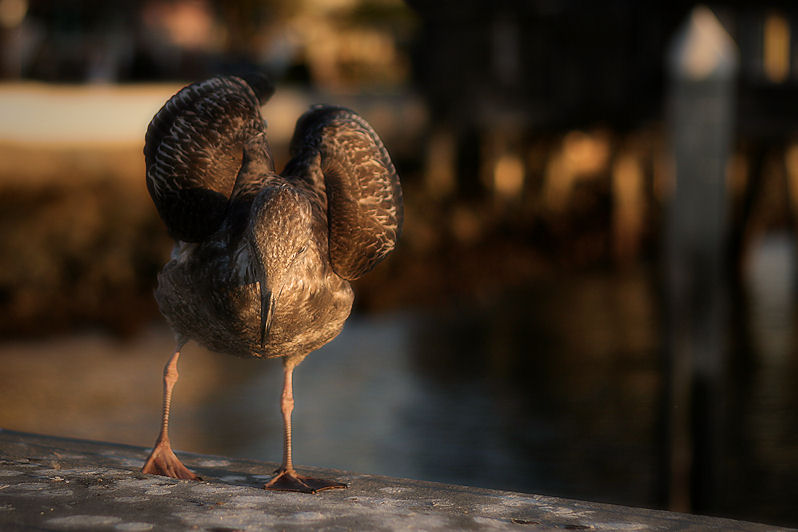Birding on San Diego Bay