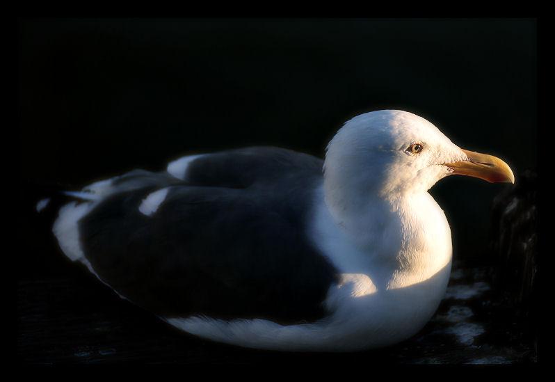 Birding on San Diego Bay - III