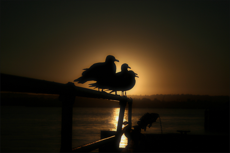 """navigation"" or ""birds… and fish"" (a California sunset)"
