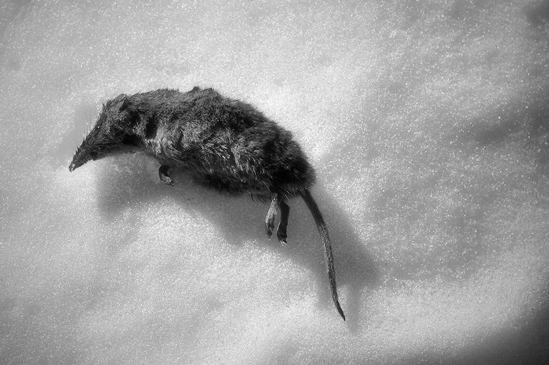 una mort freda / una muerte fria