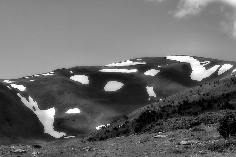 Mountain Cow / o la muntanya vaca