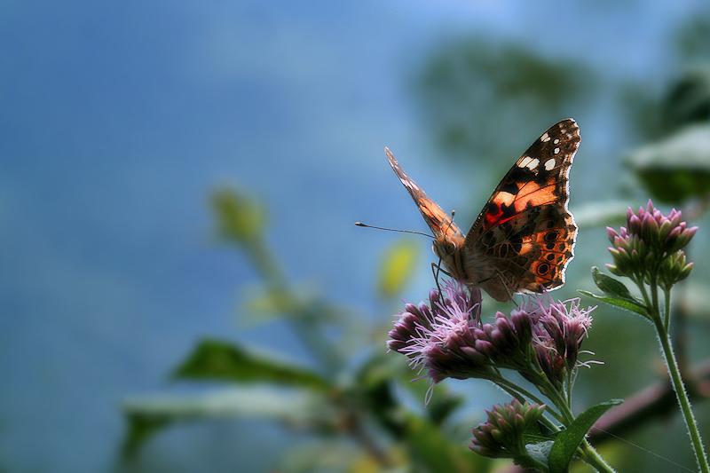 Pel camí de les papallones