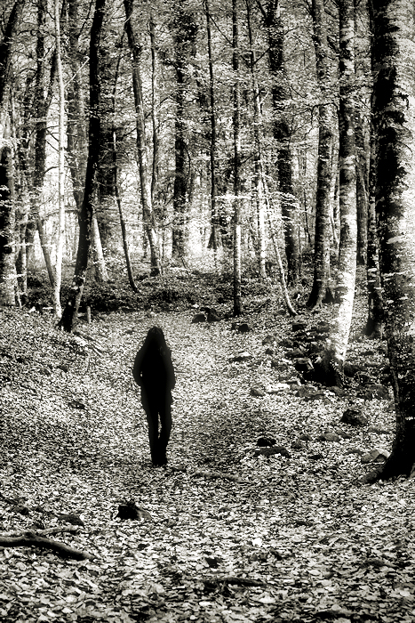 a walk into the wood