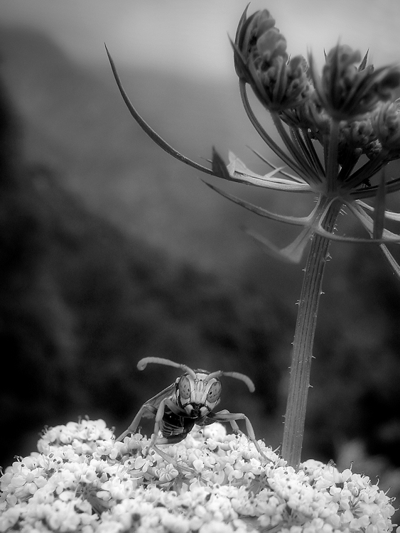 Hi Mr. Wasp, what do you see?