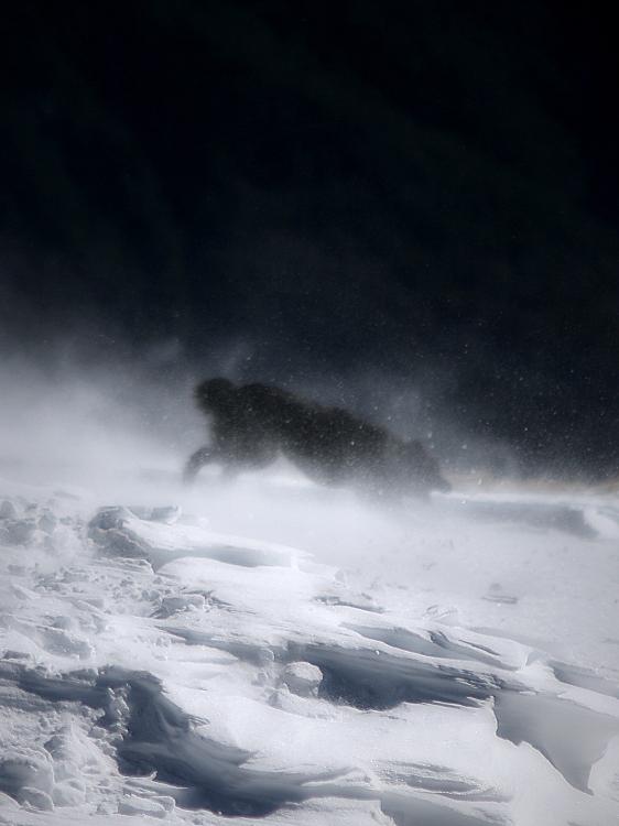 Tales from snow / Contes des de la neu