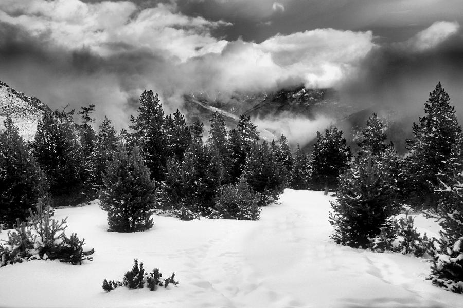 La muntanya que fabricava arbres