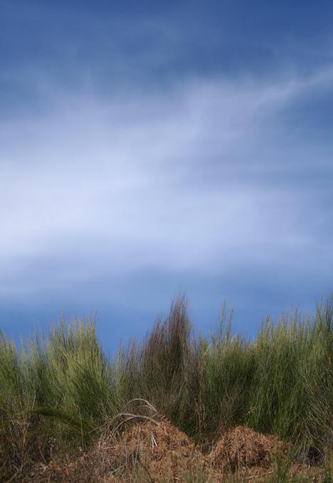 Les plantes que fabricaven un cel