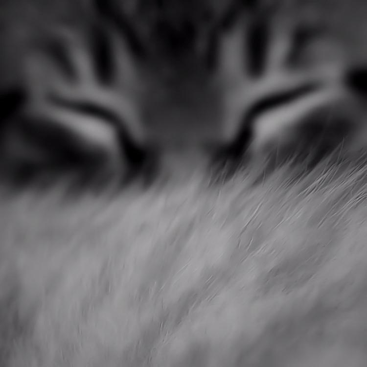 Feline fur / Pèl de felí