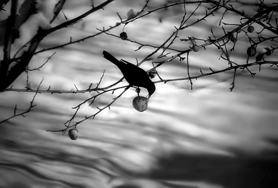 le nom des oiseaux