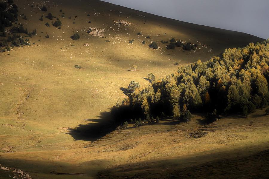 the last wood / el bosc del pinatell