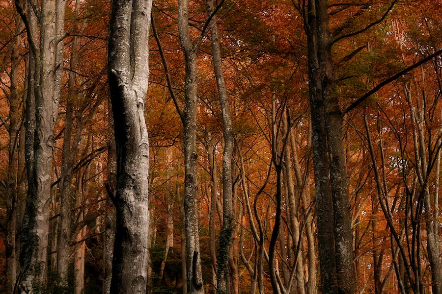 Autumn fire / Foc de tardor