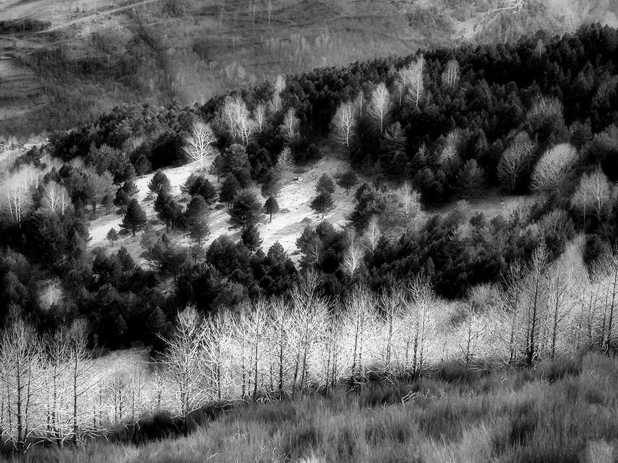 woods / boscos