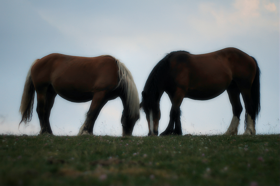 two horses with no name