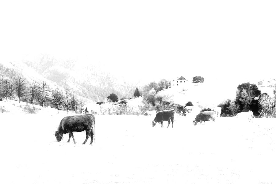 A winter landscape / Paisatge d'un hivern