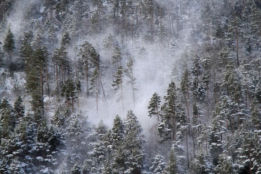 when the blizzard comes in the woods / quan el torb entra al bosc