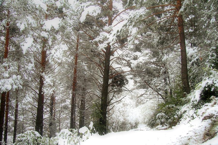 D'un passeig al bosc enmig d'una primavera que semblava hivern