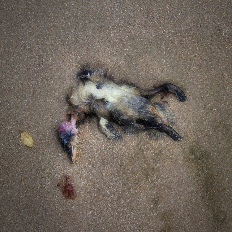 death of a bird / mort d'un ocell
