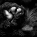 el torb, un gos d'atura