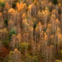 the fall / la tardor