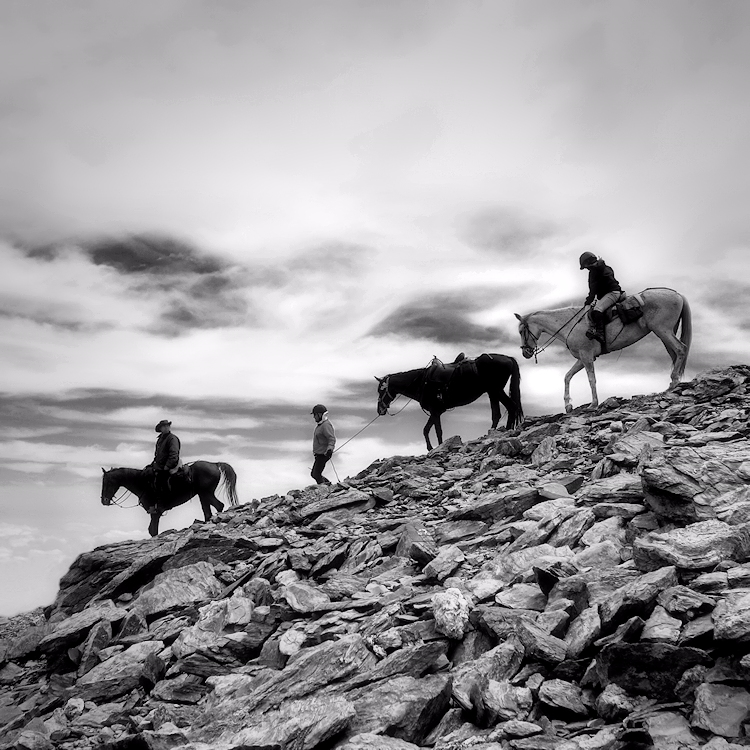 En cavall al Puigmal
