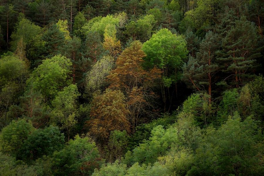 fall comes to forest / arriba la tardor al bosc