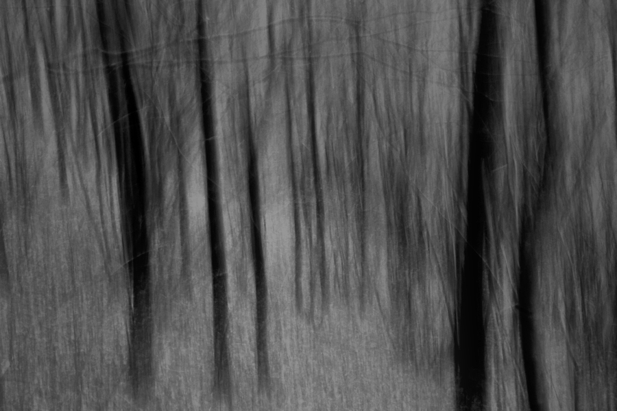 the forest (a blurry photo)