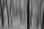 the forest (a blurry photo II)