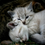 kittens / gatets