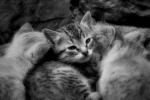 kitty between kittens