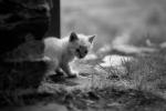 kitty / gatet