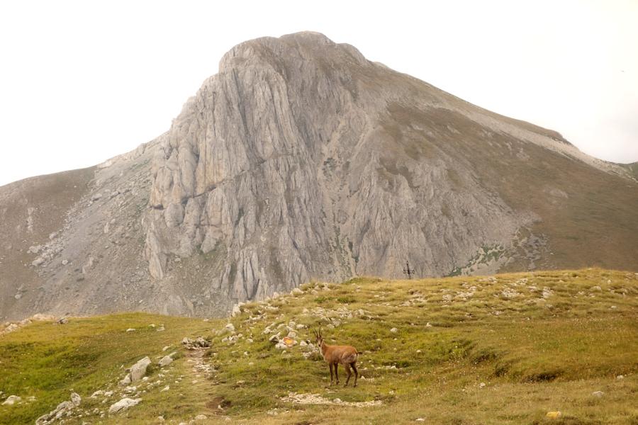 Monte Tremoggia, Monte Camicia e camoscio