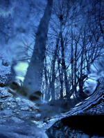 Forest, water and ice / Bosc, aigua i gel