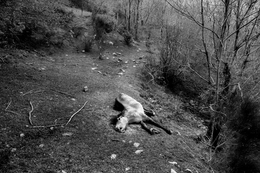 still life / natura morta – II