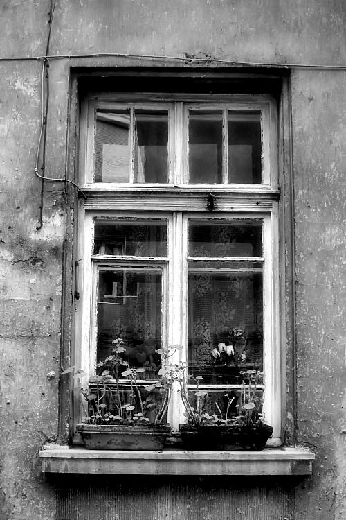 a window, a view