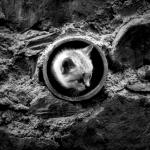Cat hole (the wall - II)