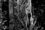A place in the forest / un racó en el bosc