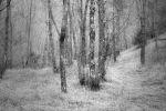 when the forest feels sad / quan el bosc es troba trist