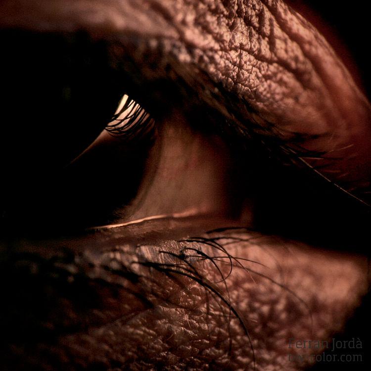 the eye / l'ull