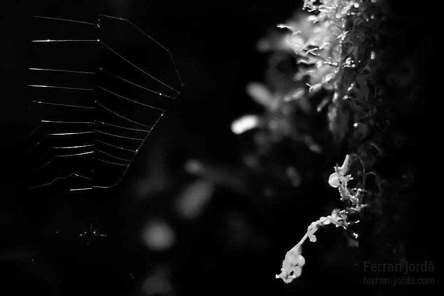 .the web.